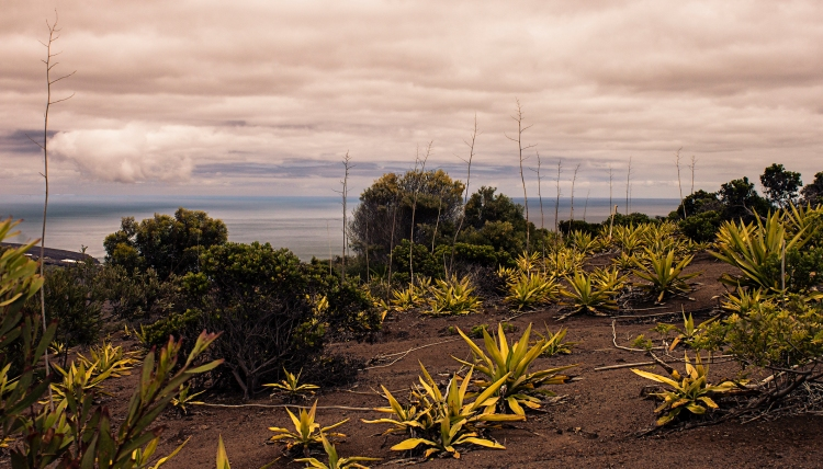 Prehistoic Landscape of Banks Valley St Helena