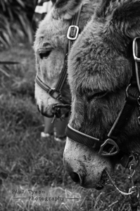 Donkey Sanctuary St Helena