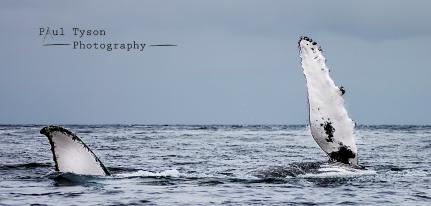 Humpback Wave