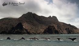Humpback Diving Composite