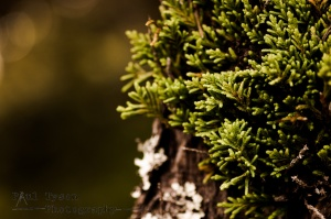 A little bit of abstract macro work on a walk around plantation wood.