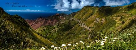 Sandy Bay Arum Lily