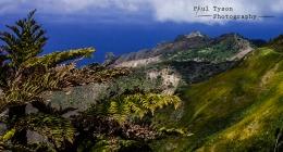 Sandy Bay Tree Fern