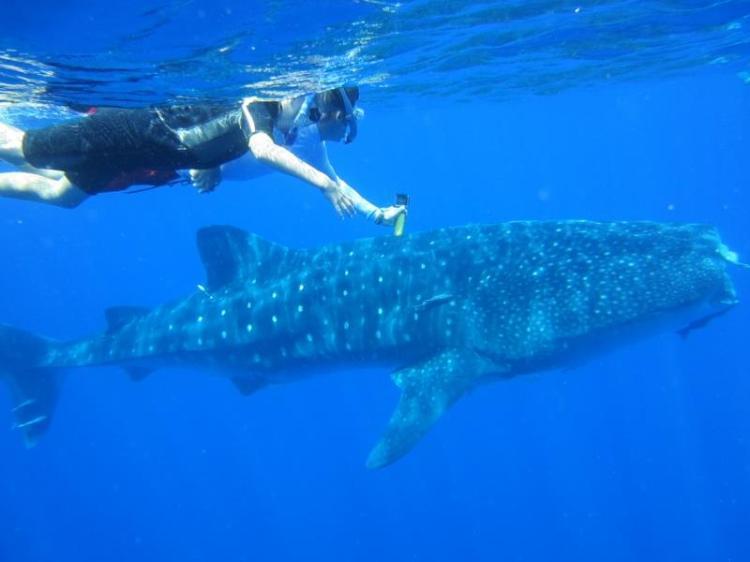 Sammi and Paul with Whale Shark