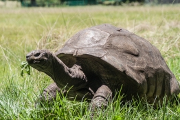 February Two Years In The Atlantic - Jonathan tortoise mind blowing 182 years old