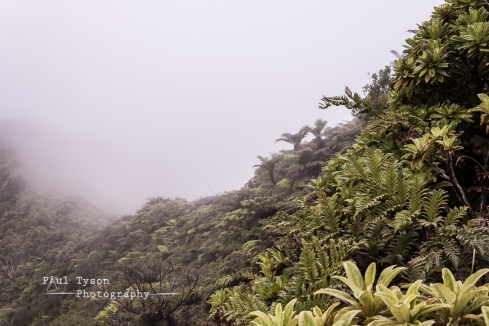 Cloud Forest of St Helena