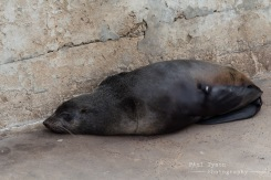 Cape Fur seals can be found lounging around in the bay.