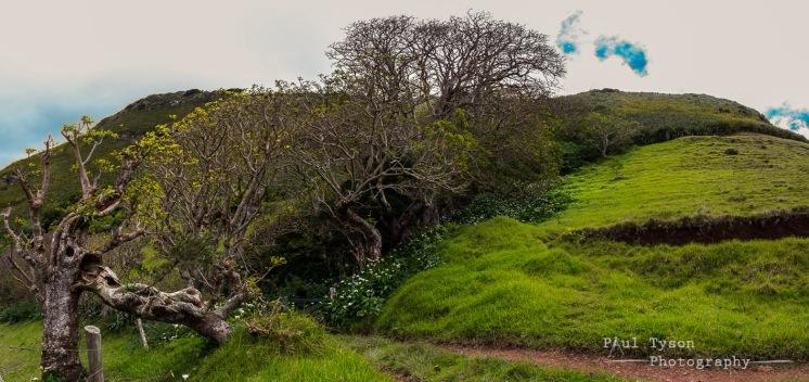 Fairy LAnd Walk St Helena