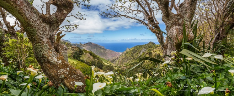 Fairy Land St Helena